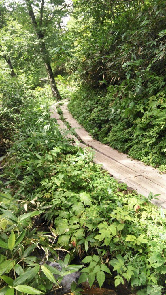 木道をひたすら歩く