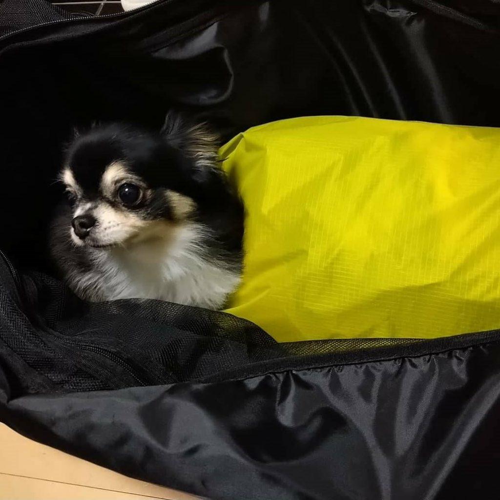 犬も入るキャリーバッグ
