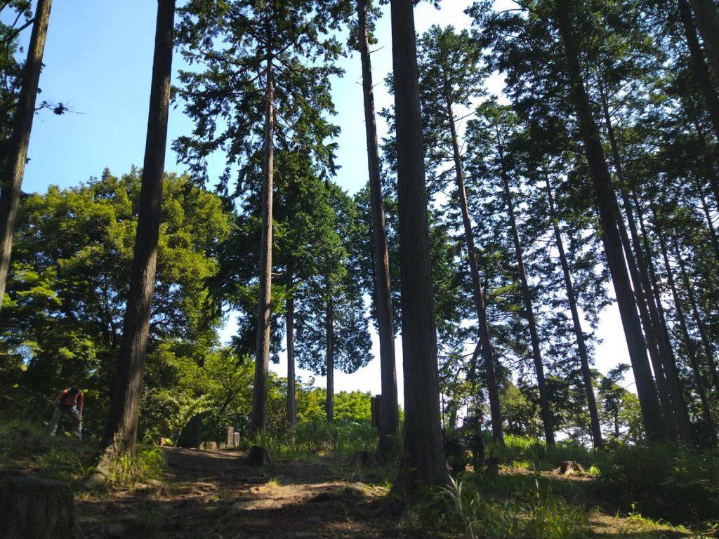 一丁平。高い木が多く、木陰があって休みやすい。ベンチもいくつかある